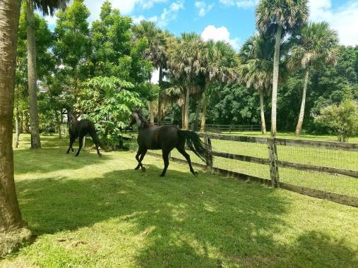 17755 Fox, Loxahatchee, Florida 33470